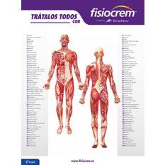 Póster Músculos Fisiocrem